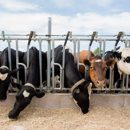 Cooperative Network supports Dairy Pride Act